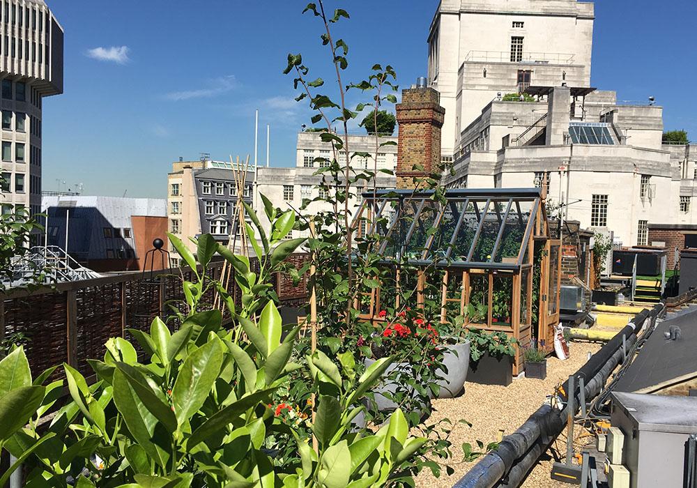 Roof_garden__0002_IMG_4355