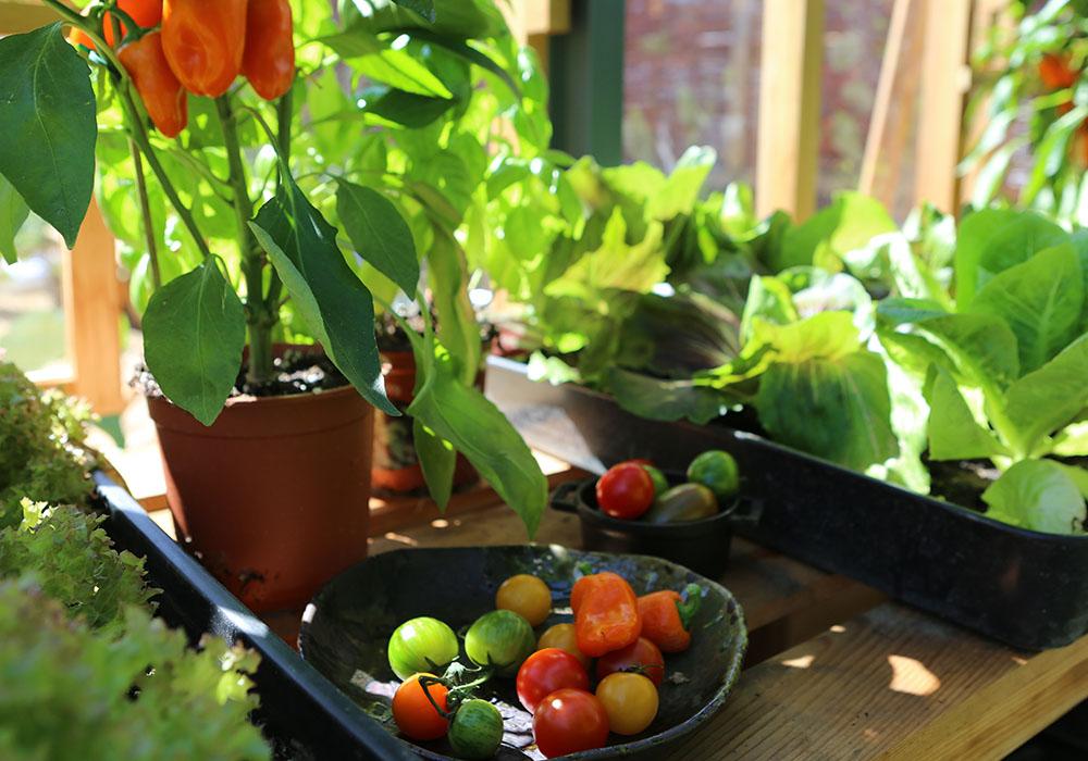Roof_garden__produce